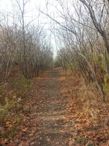 Taylor Creek Hydro Corridor Canadian Northern Ontario Railway (1)