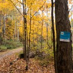 Scenes From York Regional Forest – Robinson Tract