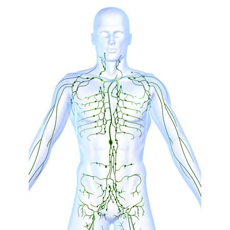 Your very own sewer system, lymph system, lymphatic drainage, homeostasis