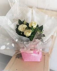 Rose Plant Gift Bag