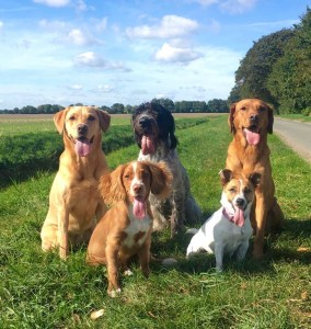 origin dog Cherry with her scentwork family