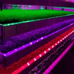 rows of tiny plants under bright colours of LED lighting: image Intellgent Growth Solutions