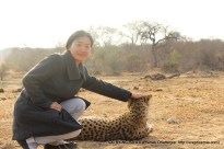 Petting the Cheetah