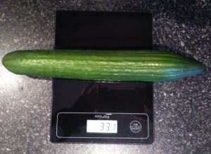 Cucumber being weighed