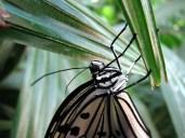 Schmetterling - Wilhelma