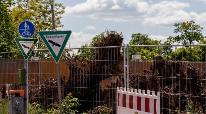 Tage des Rosensteinparks sind gezählt