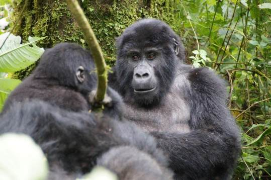 Abenteuer Uganda mit Jörg Scharff