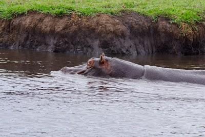 14.11. Am Chobe River
