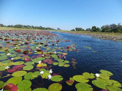 Okavango Delta Spezial