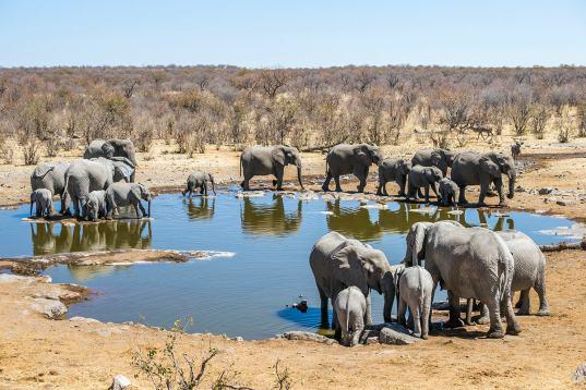 Botswana & Viktoriafälle intensiv