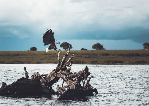 Botswana – Zwischen Wüsten und Wasser