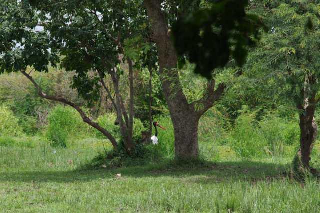 IMGP0518 - Jörg Scharff unterwegs in  Uganda und Tansania  (1.Teil)