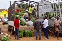 Jörg Scharff unterwegs in  Uganda und Tansania  (1.Teil)