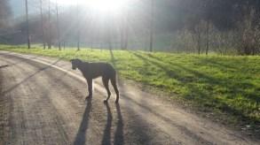 Caileigh im Sonnenaufgang