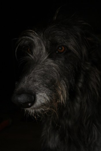 Dobby (Barneby Pinehurst)
