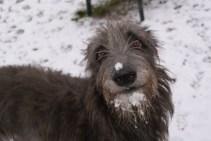 Dobby (Barneby Pinehurst) im Schnee