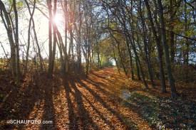 Oktobersonne mit künstlichem Lens Flare.