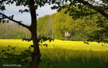Wald & Feld