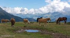Haflinger gehören zu Südtirol.