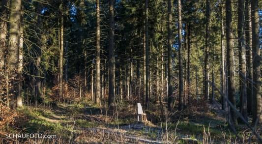 Was steht denn da im Wald?