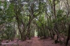 wieder ein neues Waldbild
