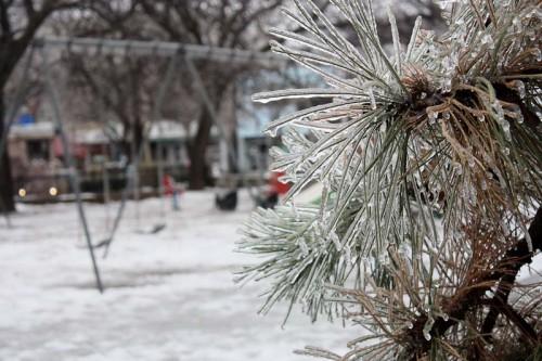 Toronto Ice Storm-7