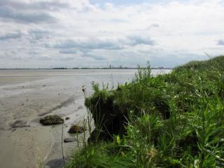 Ecotopenkaarten Westerschelde