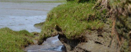 Natuurlijke en onnatuurlijke erosie van de schorrand