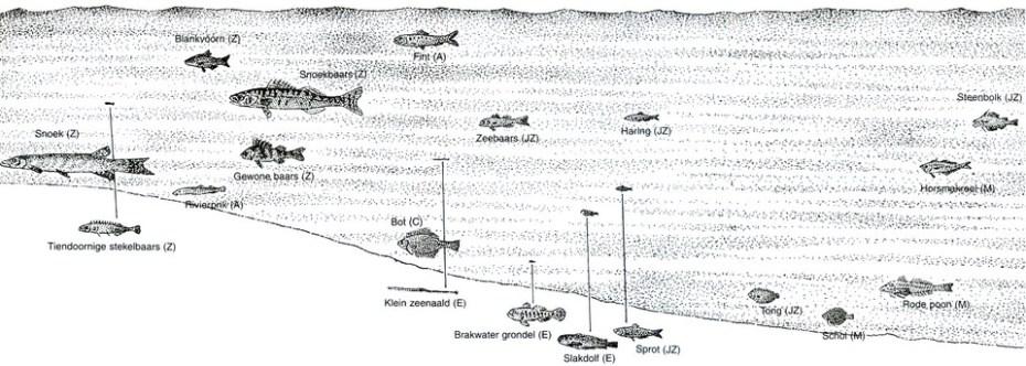 vissen-groot