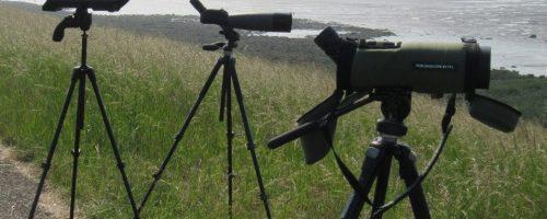 Ruim 300.000 trekvogels boven ons land geteld afgelopen weekend