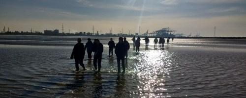 Laagwaterwandeling 25 november volzet