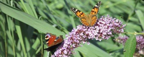 Vlinder mee – Op zoek naar zomers gefladder