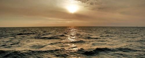 Herontdekte riffen van de Noordzee vragen om bescherming