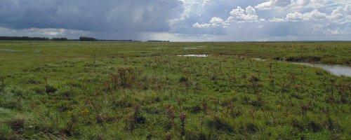 Beleef het Verdronken Land van Saeftinghe vanuit vogelperspectief