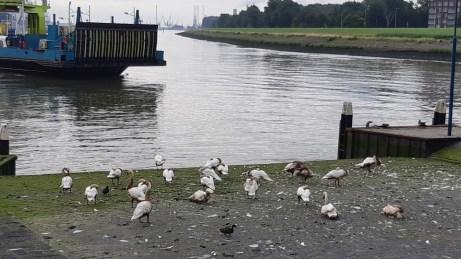20180624--rotterdam--olielekkage--foto-ard-quack--001