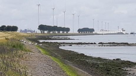 20180624--rotterdam--olielekkage--foto-ard-quack--004