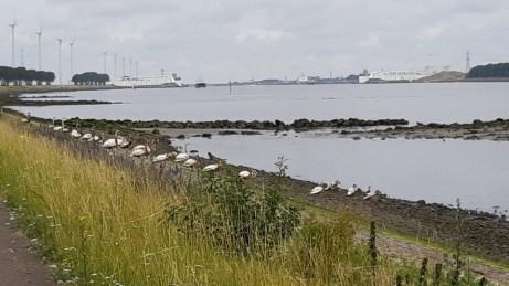 20180624--rotterdam--olielekkage--foto-ard-quack--005