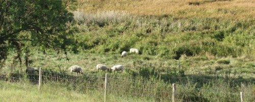 Begrazing zilt grasland