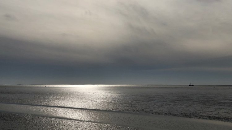'Mapping the Wadden Sea ecosystem under water'