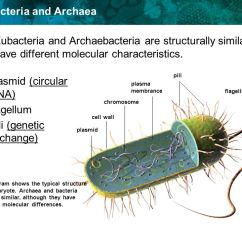 Venn Diagram Of Bacteria And Archaea 91 240sx Ignition Wiring Archaebacteria Eubacteria
