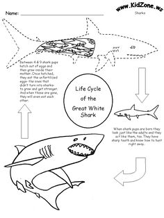 Narwhal Life Cycle Diagram