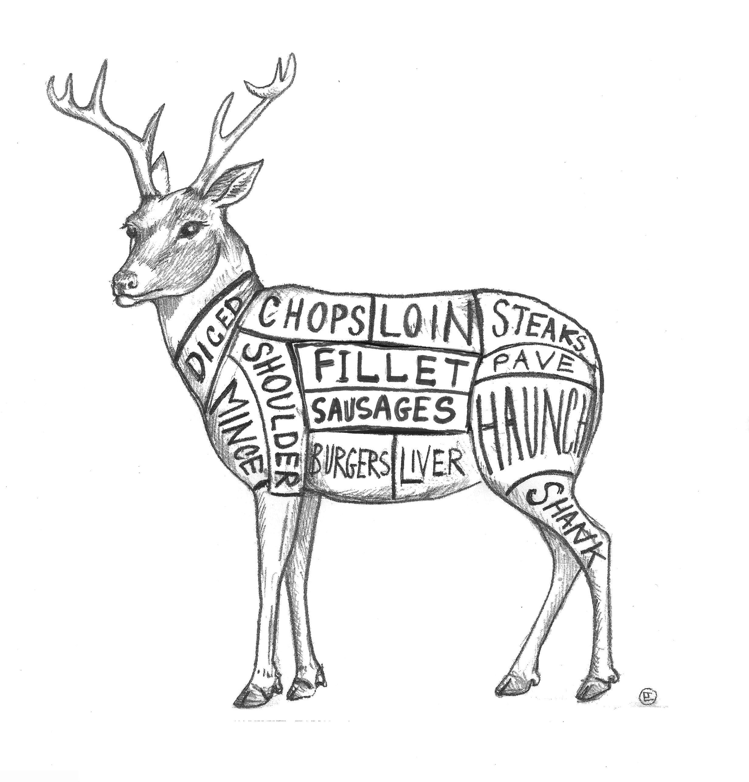 Whitetail Deer Butchering Meat Cuts Diagram