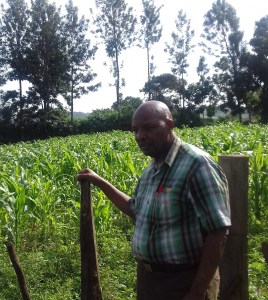 my-corn-field-2-june-2016_kleiner