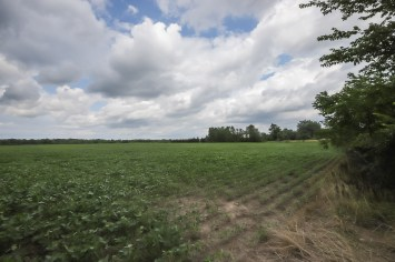 17-PT Lot 20 Canboro Road, Fenwick