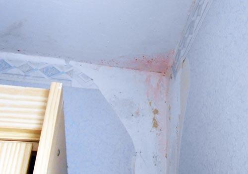 Schimmel Wand Arten Good Im Schimmel Wand Unter Der Lupe