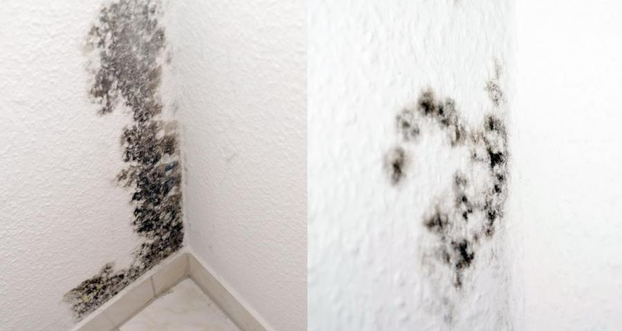 SchimmelPeter - Mit uns gegen feuchte Wände und nasse Keller
