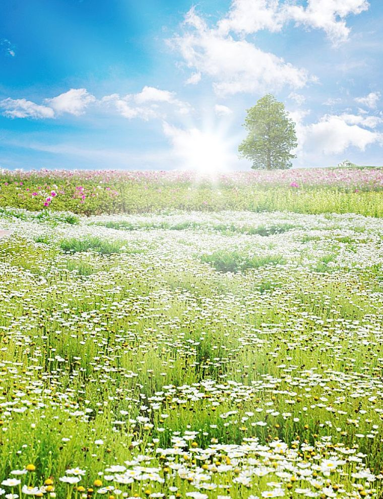 Spring field with daisy and colorful flowers