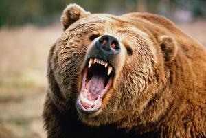 Bjørnen brøler logo