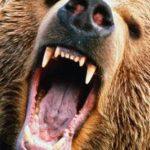 Arts by the Bear