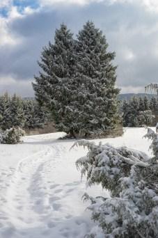 Traumpfad Bergheidenweg (10)
